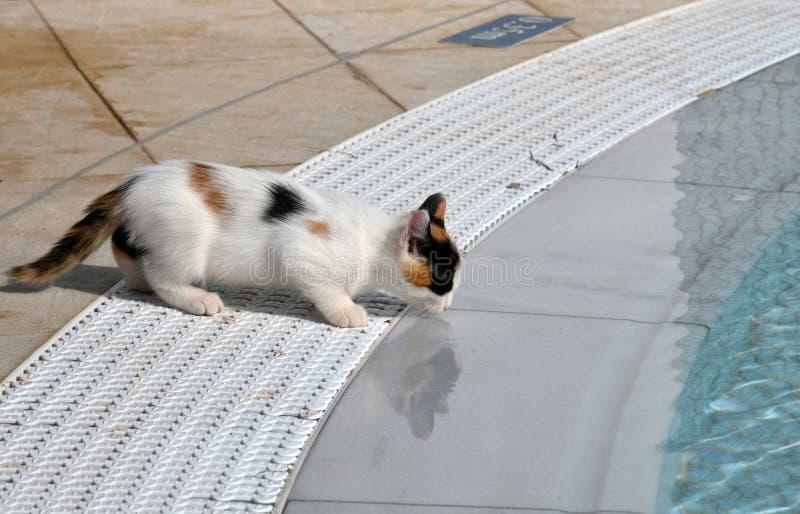 Het katje drinkt water buiten van de pool royalty-vrije stock fotografie