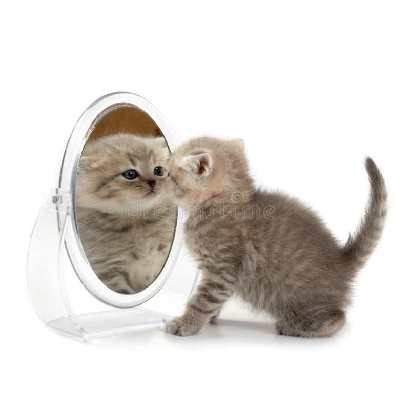 Het katje kijkt in spiegel royalty-vrije stock foto's