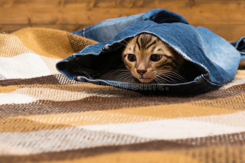 Het katje krijgt uit jeans liggend op de vloer royalty-vrije stock foto