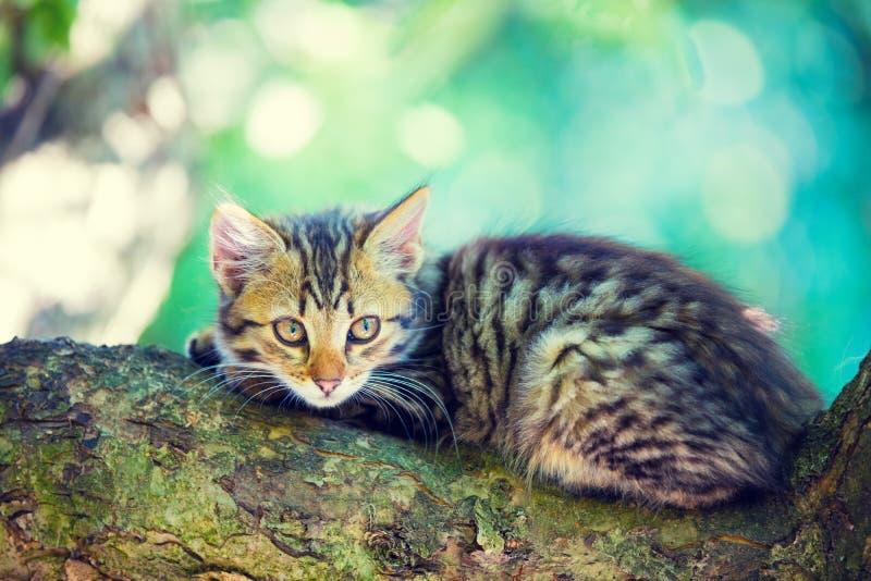 Het katje ligt op een boomtak royalty-vrije stock foto's