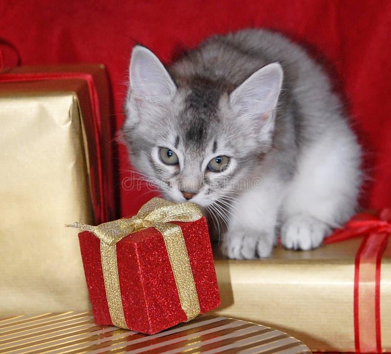 Het katje met Kerstmis stelt voor royalty-vrije stock afbeelding