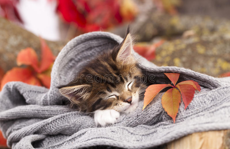 Het katje slaapt stock afbeelding