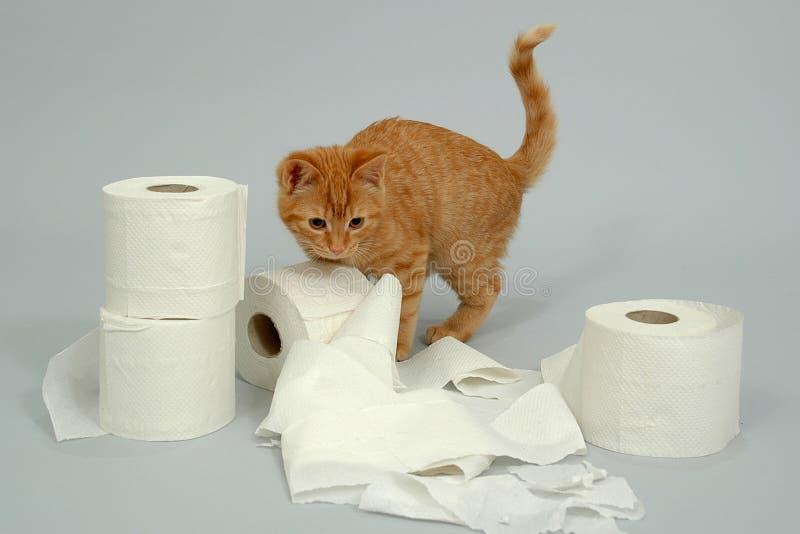 Het katje speelt royalty-vrije stock fotografie