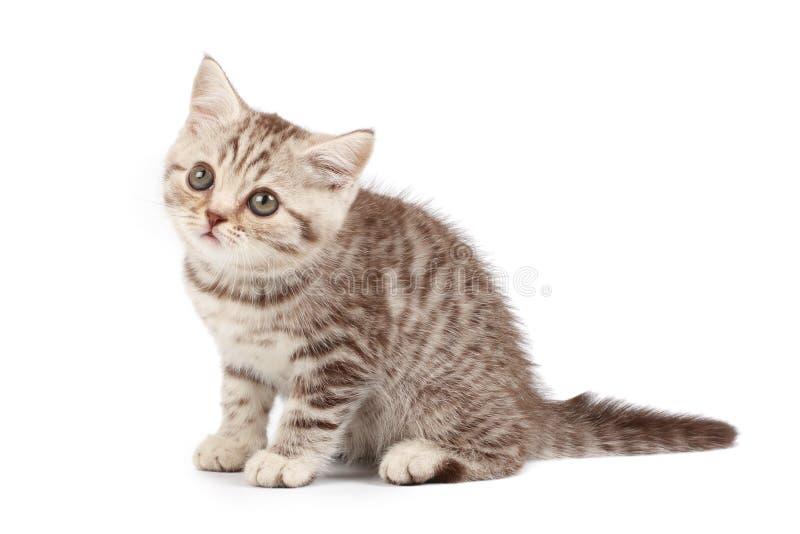 Gestreepte katkatje stock foto's