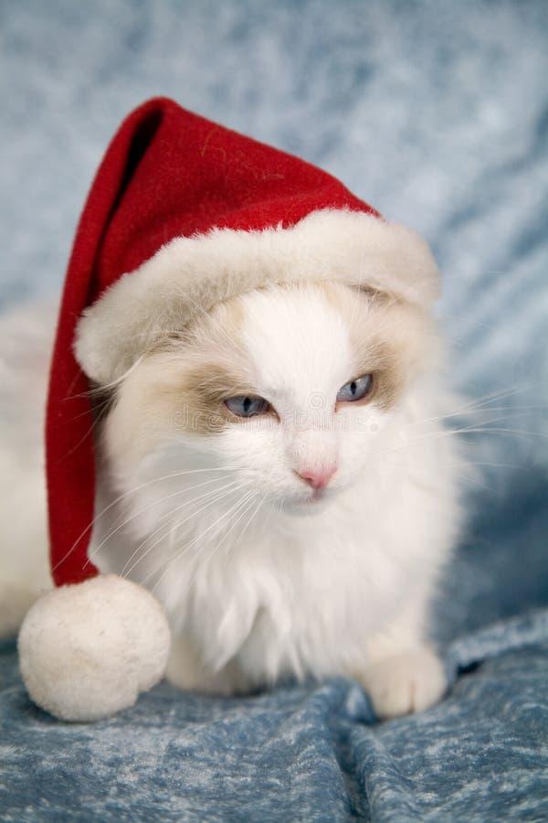 Het katje van de kerstman royalty-vrije stock fotografie