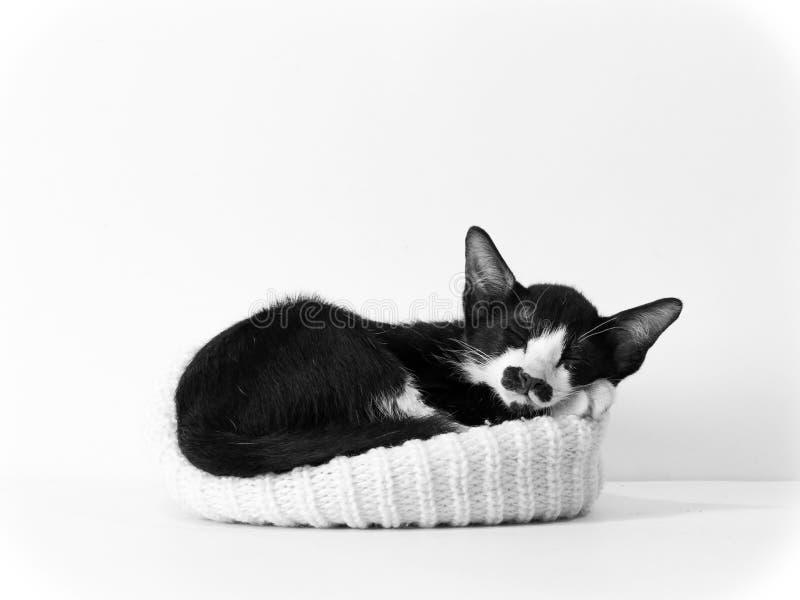 Het katje van de slaap in zwart-wit royalty-vrije stock foto