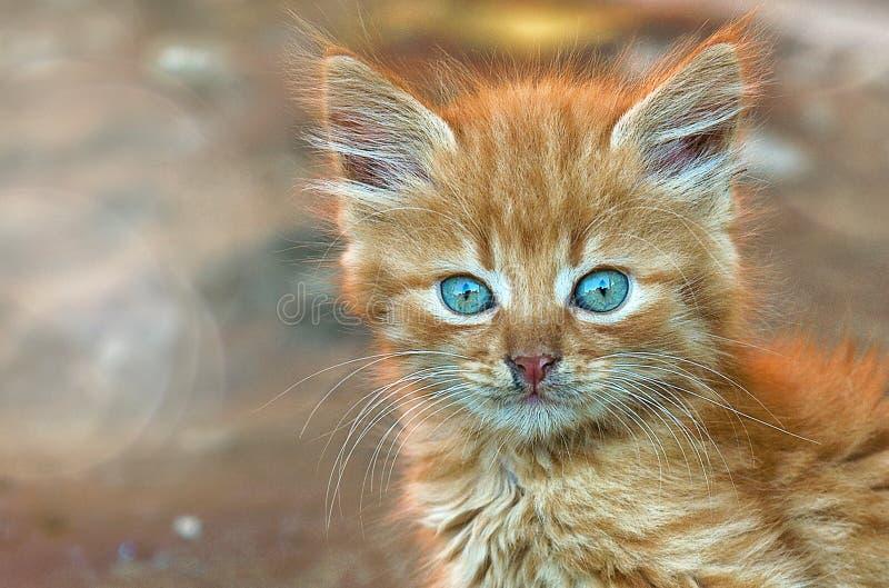 Het katje van het gemberkatje kijkt weinig pot royalty-vrije stock afbeelding