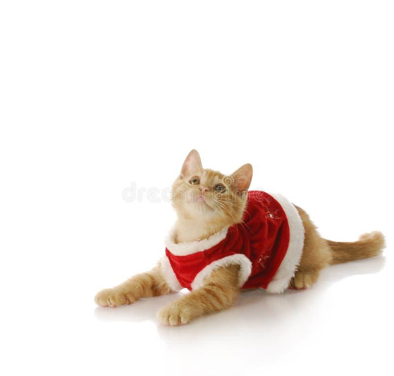 Het katje van Kerstmis royalty-vrije stock fotografie