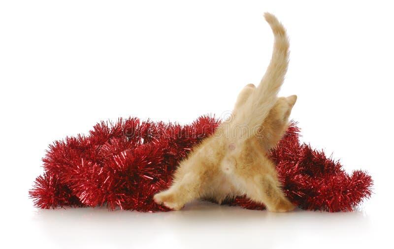 Het katje van Kerstmis royalty-vrije stock afbeelding