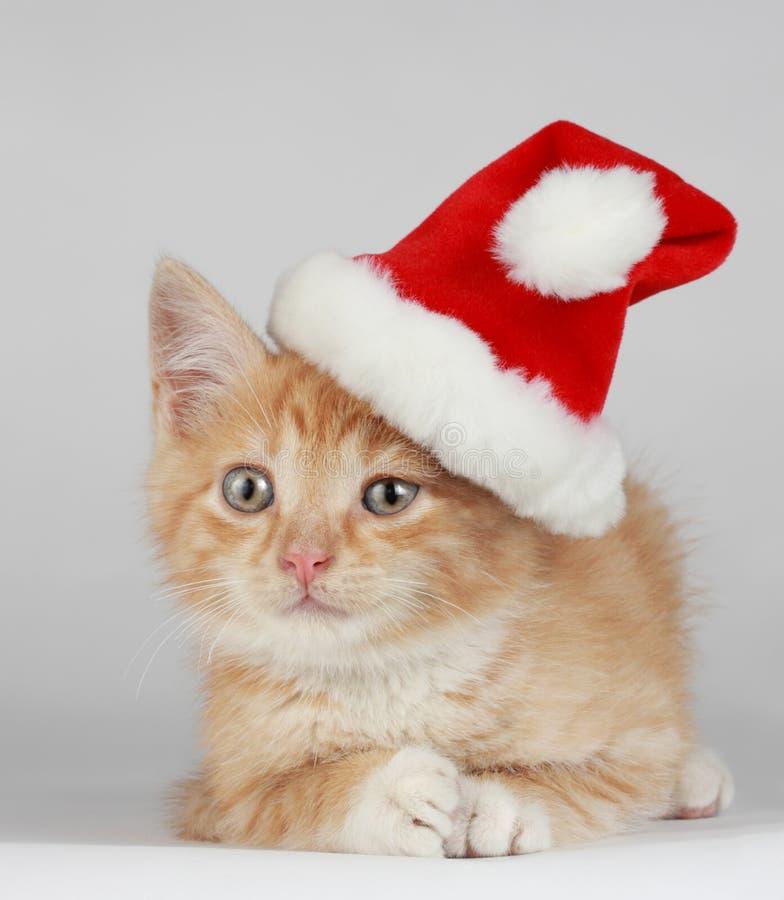 Het katje van Kerstmis stock afbeeldingen