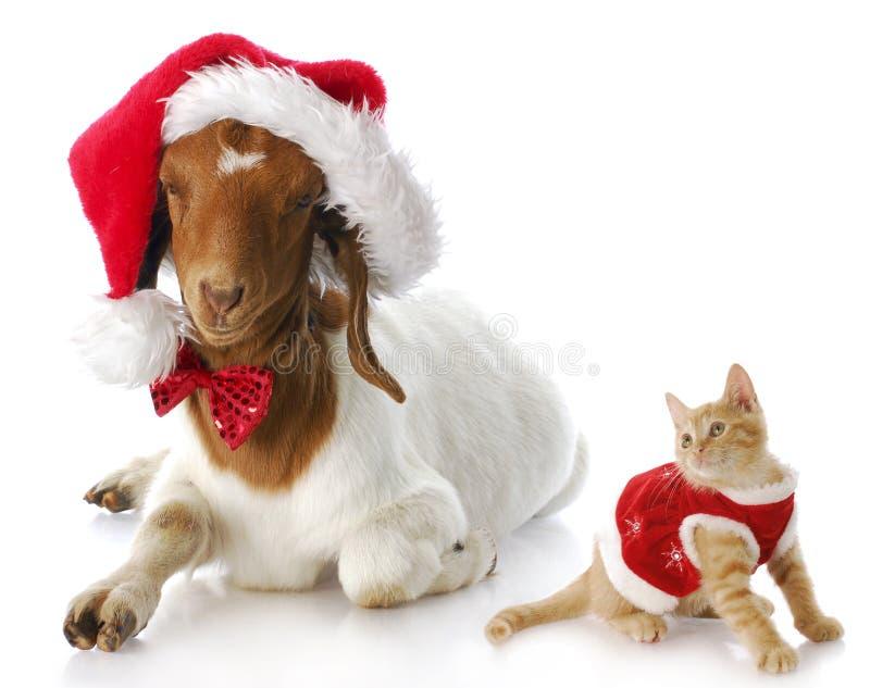 Het katje van Kerstmis en santageit stock fotografie