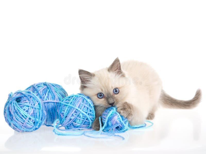 Het katje van Ragdoll met ballen van blauw garen stock foto