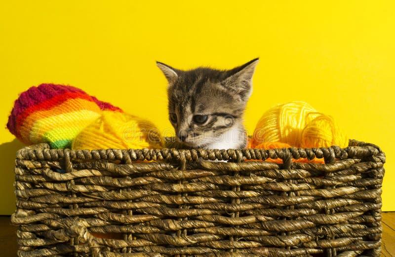 Het katje zit in een mand met ballen van wol Het favoriete handwerk is een hobby stock afbeeldingen