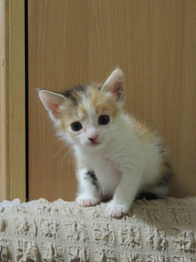 Het katjesliefde van Nice en super kat stock afbeelding