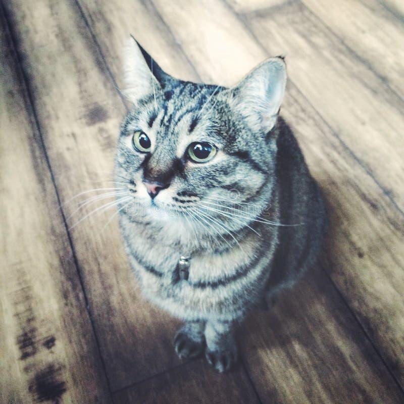Het katten` s leven Het dromen over wat? royalty-vrije stock foto's