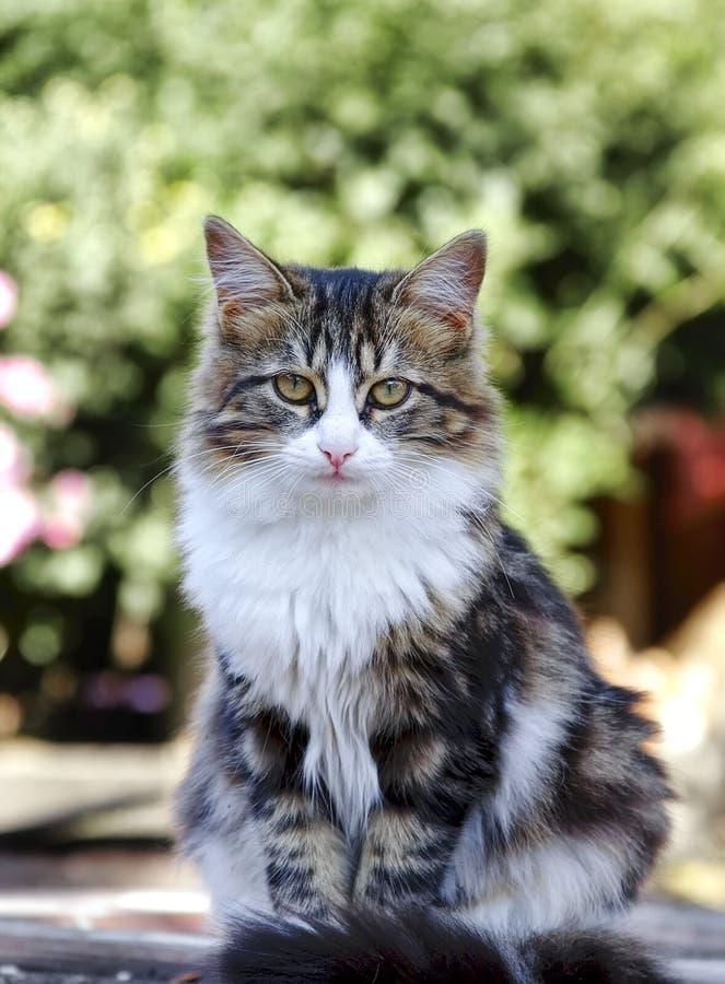 Het kattenportret royalty-vrije stock foto