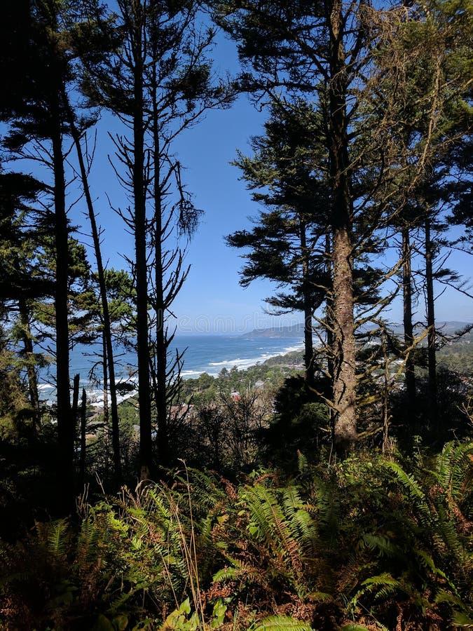 Het kijken neer op de Kust van Oregon door de Bomen royalty-vrije stock foto's