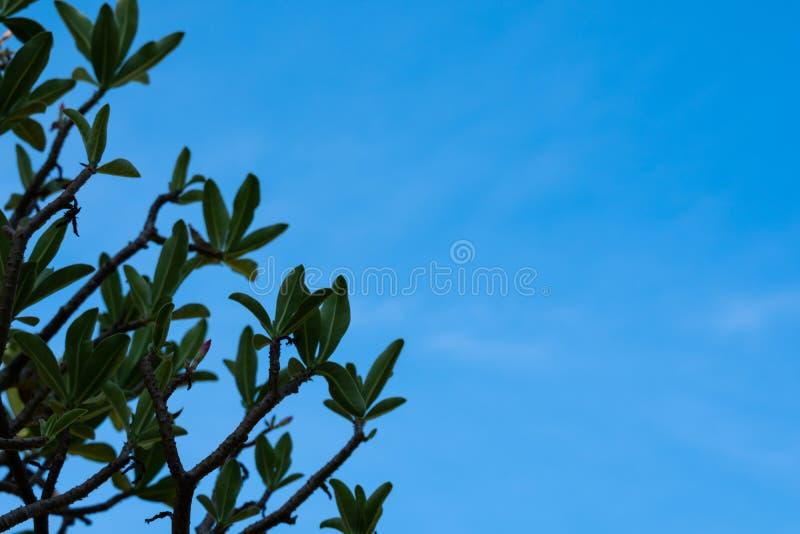 Het kijken omhoog aan de blauwe hemel op een bewolkte dag royalty-vrije stock afbeelding