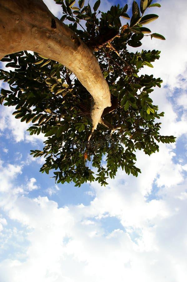 Het kijken omhoog een boom royalty-vrije stock afbeeldingen