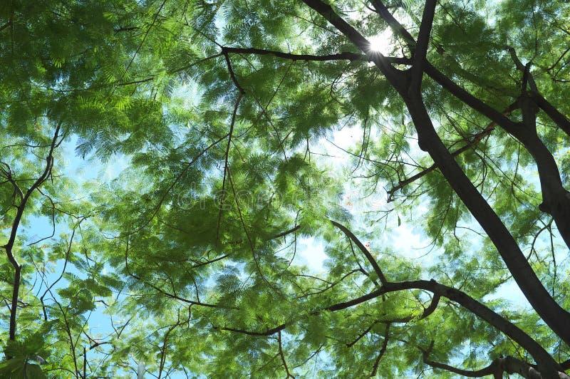 Het kijken omhoog maar kan ` t door de hemel zien stock afbeeldingen