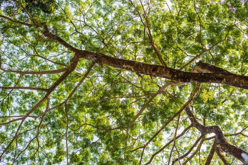 Het kijken omhoog van onder mening de boom met zonlicht stock fotografie