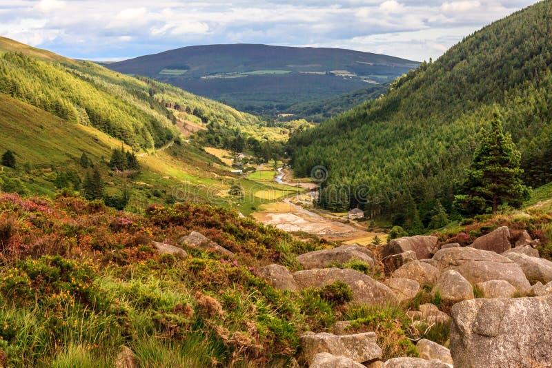 Het kijken onderaan het Nationale Park van valleiwicklow stock foto