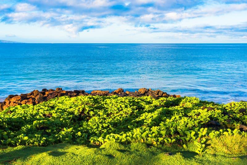 Het kijken uit over de Stille Oceaan stock foto
