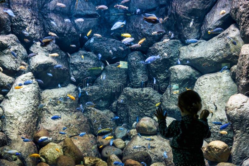 Het kind bekijkt de overzeese vissen in aquarium royalty-vrije stock foto's
