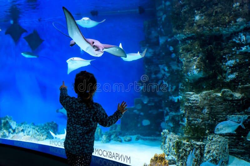 Het kind bekijkt pijlstaartroggen in het grote aquarium stock fotografie