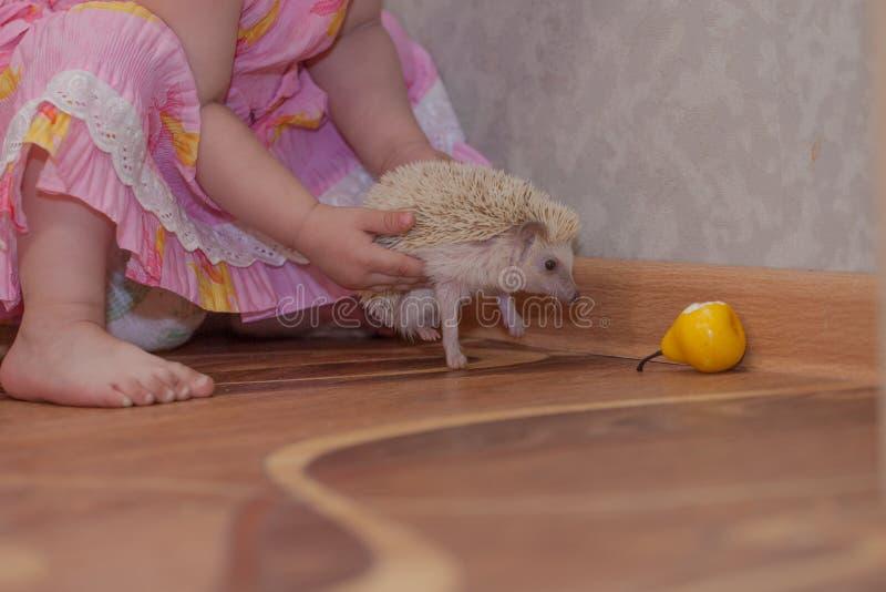 Het kind houdt een egel Meisjespelen met het dier royalty-vrije stock afbeelding
