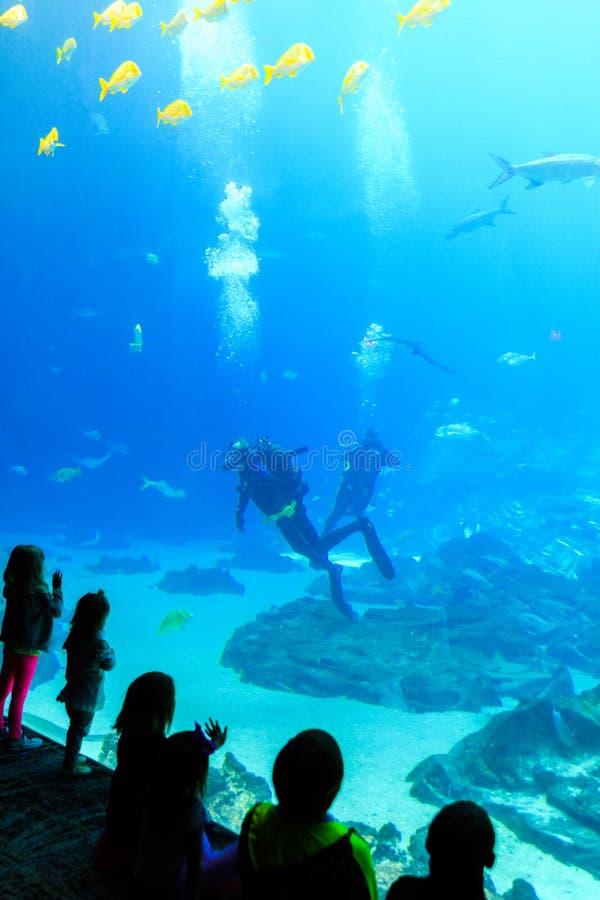 Het kind let op Scuba-duiker in tank met diverse overzeese schepselen bij het aquarium de V.S. van Georgië stock fotografie