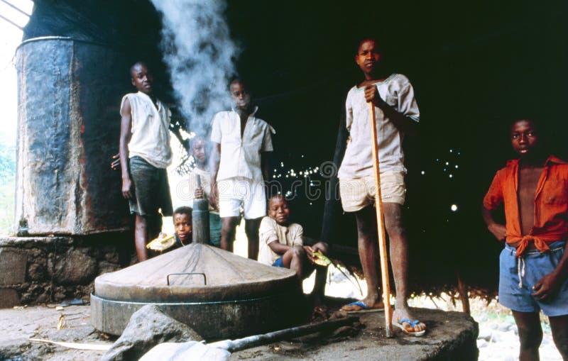 Het kindwerk Grande Comores: De oogst van de Kananga-olieinstallatie zal destilled hier aan een parfumuittreksel in Mutsamudu zij royalty-vrije stock foto