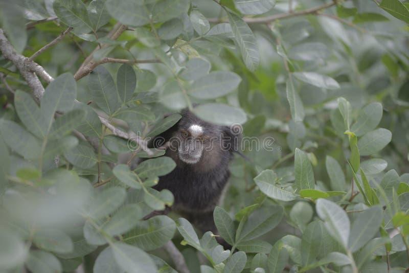 Het kleine aap verbergen in bladinstallatie stock fotografie