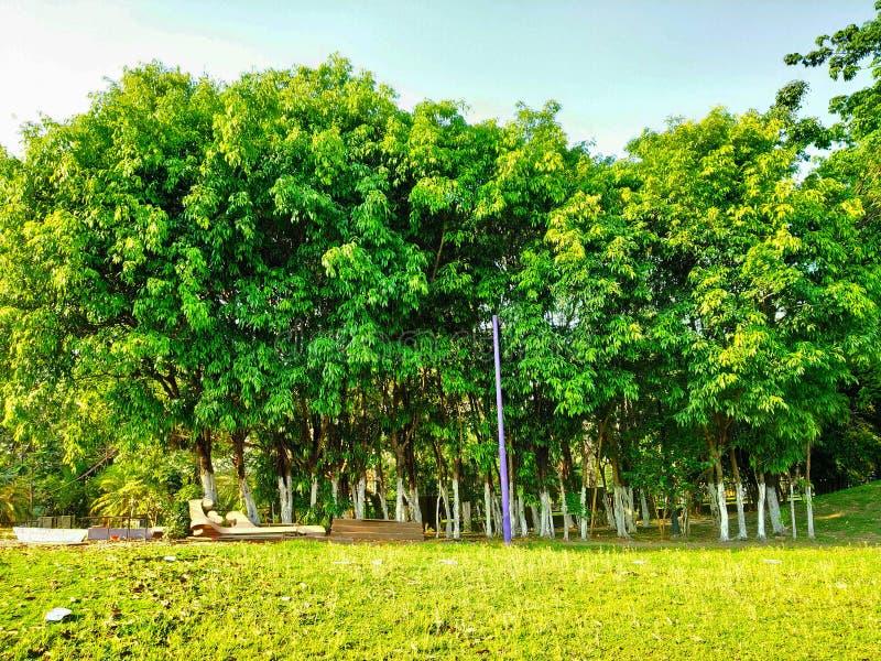 Het kleine bos in tuin kijkt zo mooi en groen en de gezien achtergrond van de bluhemel was magische zo mooi stock foto