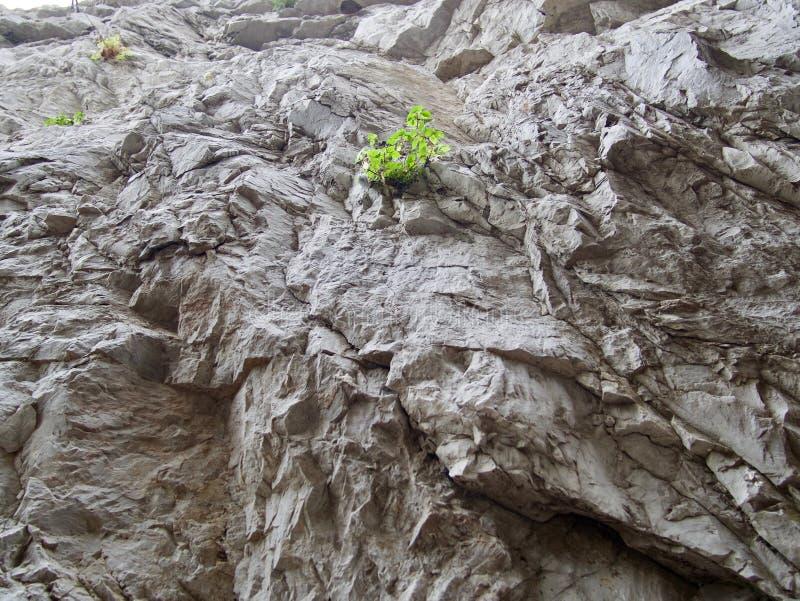 Het kleine groene installatie groeien op een rotsachtige richel royalty-vrije stock afbeeldingen
