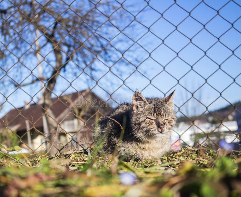 Het kleine kat lijden stock afbeeldingen