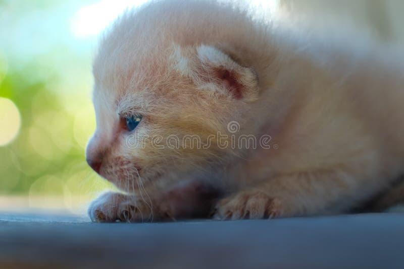 Het kleine katje liggen stock afbeelding