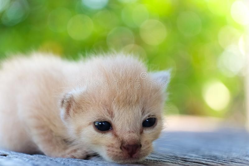 Het kleine katje liggen stock foto