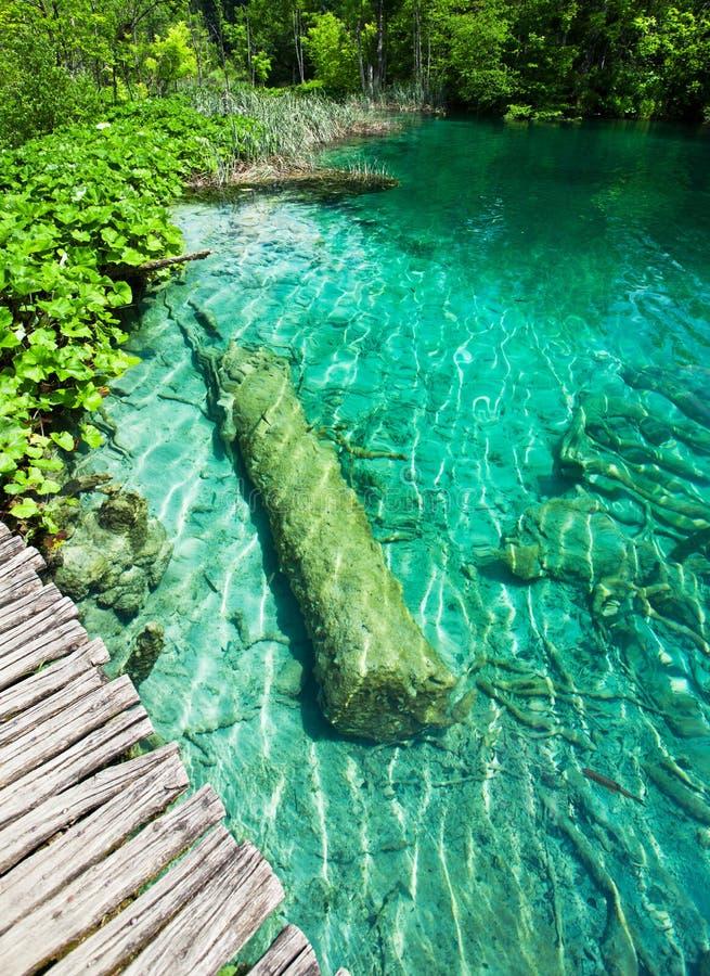 Het kleine meer van Nice in de Kroatische nationale Meren van parkplitvice met ondergedompelde boomstam royalty-vrije stock afbeeldingen