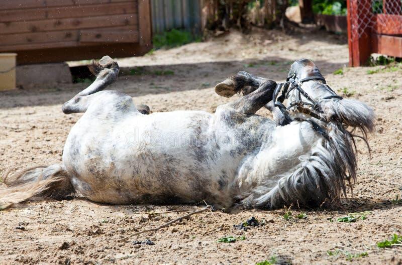 Het kleine paard, poney, gaat voor een aandrijving royalty-vrije stock foto