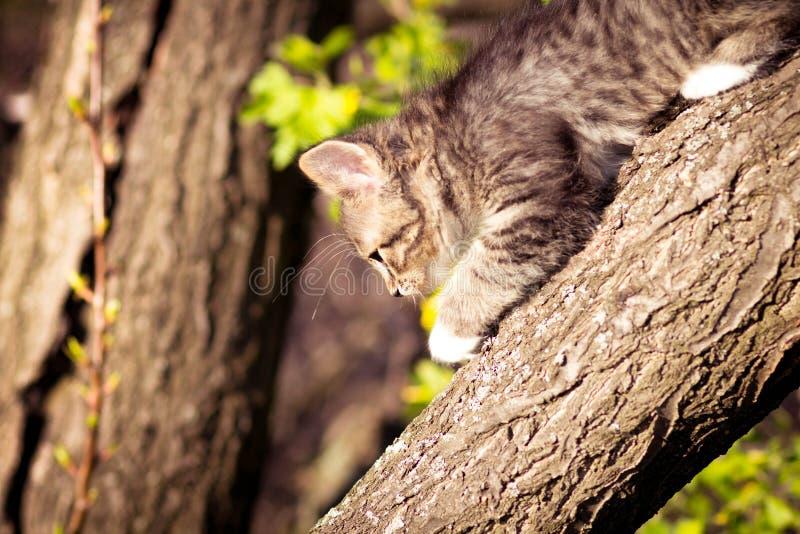 Het kleine pluizige katje beklimt op een boom stock foto
