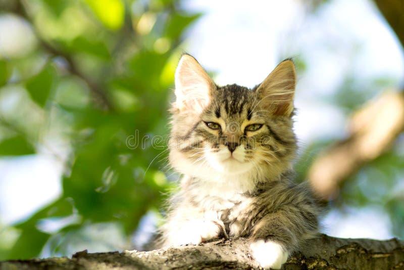 Het kleine pluizige katje ligt op een boomtak stock fotografie