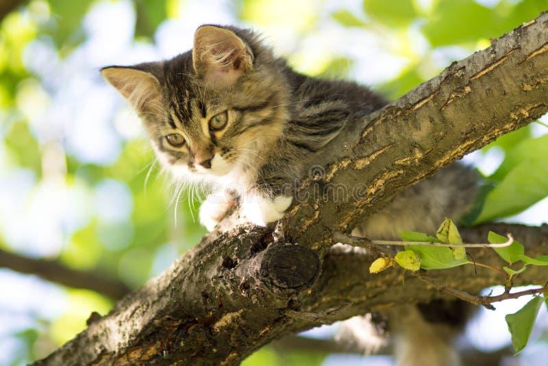 Het kleine pluizige katje ligt op een boomtak stock foto