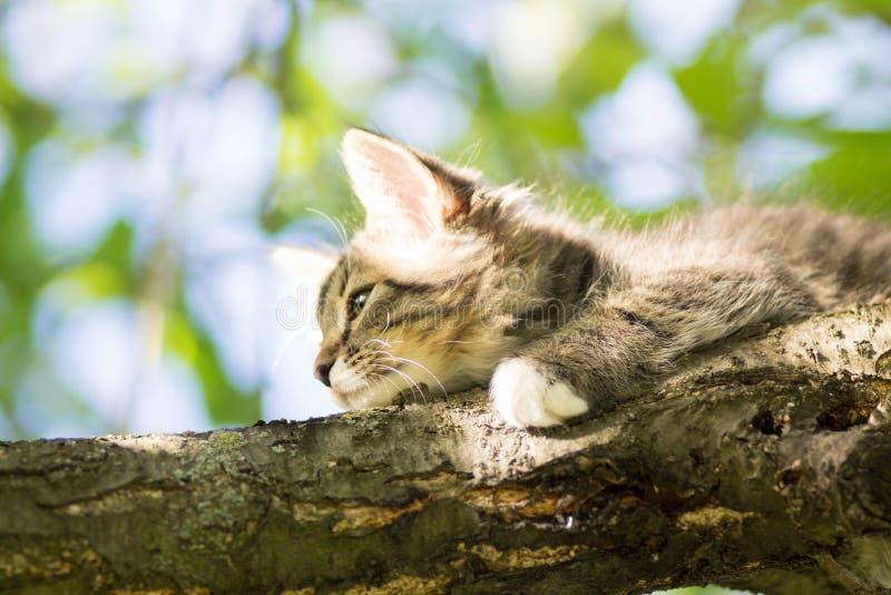 Het kleine pluizige katje ligt op een boomtak royalty-vrije stock fotografie