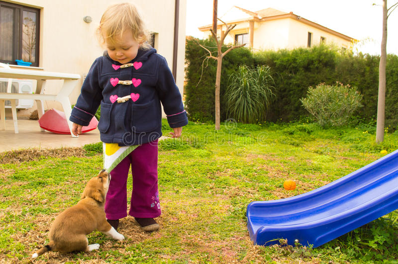 Het kleine puppy trekt mooi meisje door de sweater royalty-vrije stock fotografie