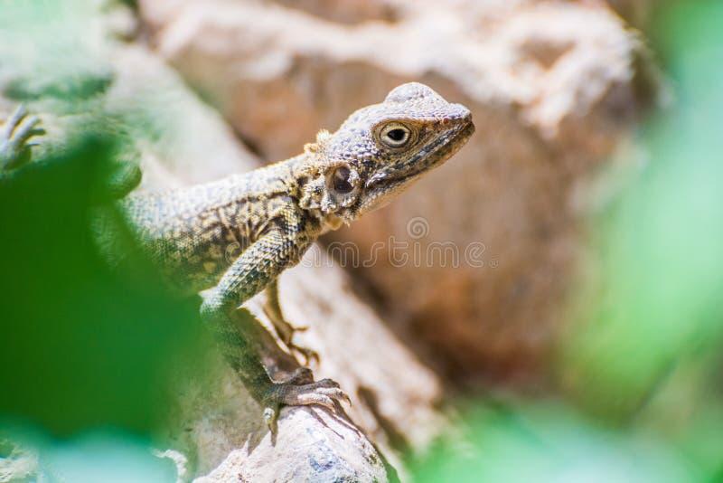 Het kleine reptiel dat achter groen wordt verborgen doorbladert royalty-vrije stock foto's