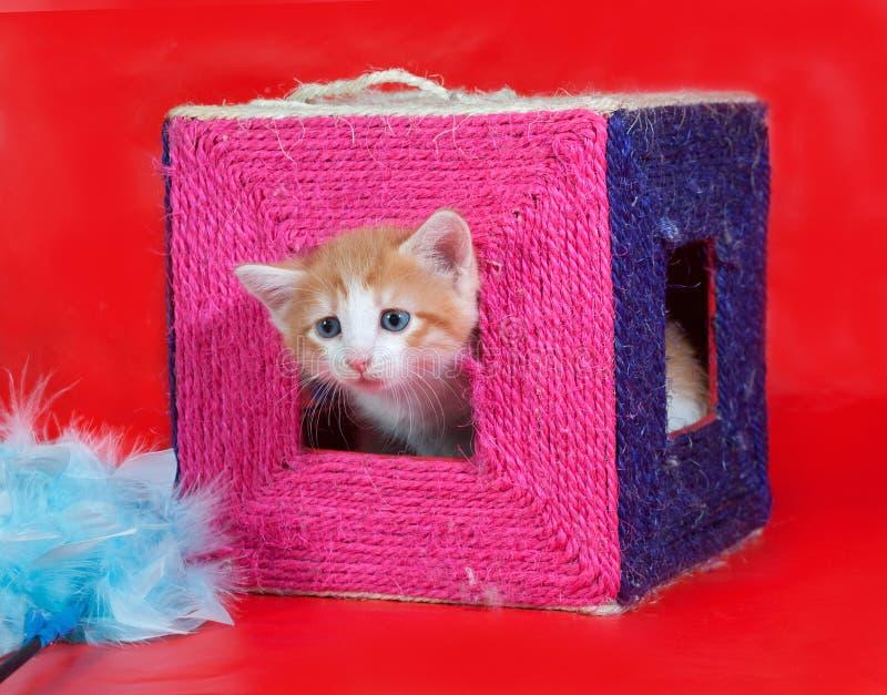 Het kleine rode en witte katje krijgt uit het krassen van posten op rood stock afbeeldingen