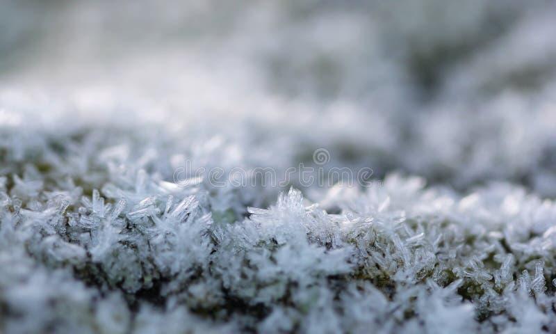 Het kleine van ijskolommen en aren macroschot stock afbeelding