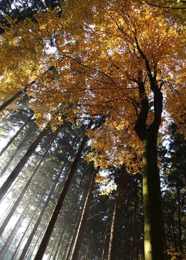 Het kleurrijke bos van de herfst stock fotografie