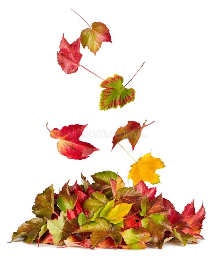 Het kleurrijke de herfst vallen die neer op dalingsstapel vliegen van bladerenfolia stock afbeeldingen
